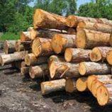 کارگاه چوب بری