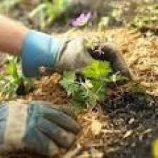 کشاورزی باغبانی