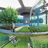 کاربرد انرژی هسته ای در کشاورزی